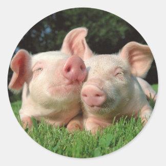 Schwein-runder Aufkleber