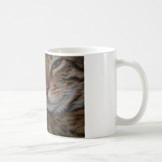 Schwermütige bengalische Katze Kaffeetasse