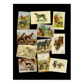 Scottish deerhound: Vintage Postkarte