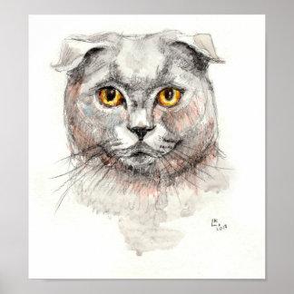 Scottish-Falten-Katze Poster