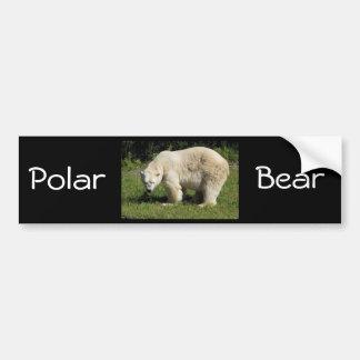 scowling Eisbär Autoaufkleber