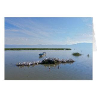 See Chapala Pelikane Karte