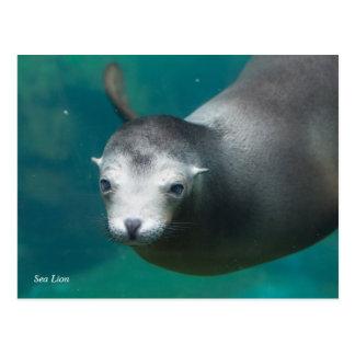 Seelöwe Smithsonian | Postkarte