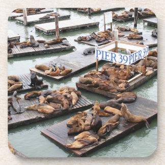 Seelöwen des Pier-39 in San Francisco Getränkeuntersetzer