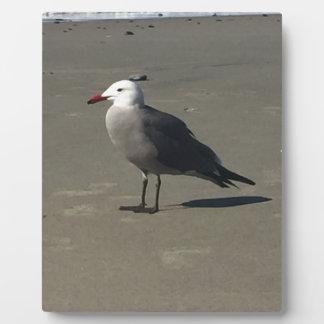Seemöwe auf dem Strand Fotoplatte