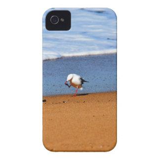 SEEMÖWE AUF STRAND QUEENSLAND AUSTRALIEN iPhone 4 COVER