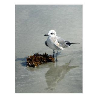 Seemöwe mit Meerespflanze Postkarte