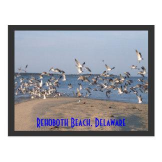 Seemöwe-Postkarte, Rehoboth Strand, Delaware Postkarte
