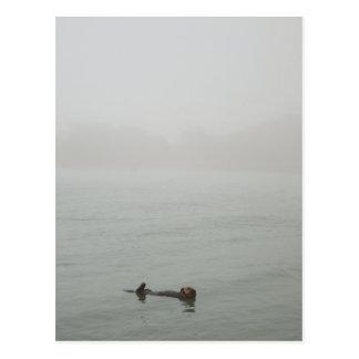 Seeotter im Nebel Postkarte