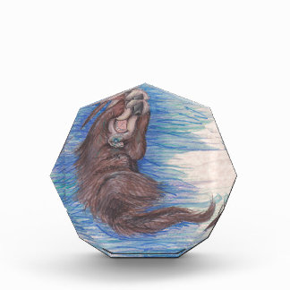 Seeotter-kleines wildes Tier-Lebewesen niedlich Acryl Auszeichnung