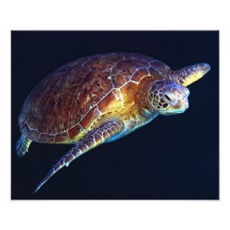 Seeschildkröte-Foto-Druck