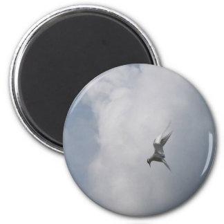 Seeschwalbe im Himmelmagneten Runder Magnet 5,1 Cm