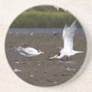 Seeschwalben-Vogel-Tier-Tier-Sumpfgebiet-Strand Getränkeuntersetzer