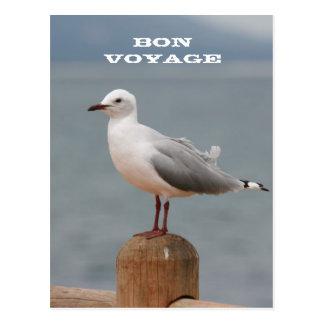 Seevogel-Reise-Postkarte Postkarte