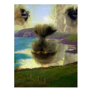 Sehnsucht Halbinsel Dingle Irland Postkarte