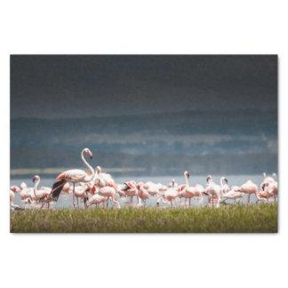 Seidenpapier mit Bild der Flamingos