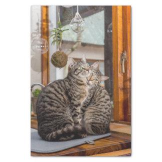Seidenpapier mit Bild von zwei Katzen