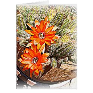 Seil-Kaktus-Blüte Karte