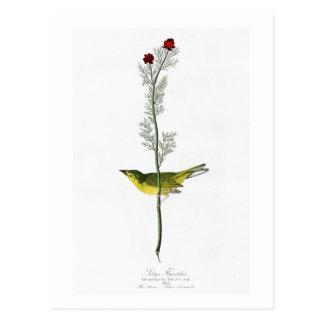 Selbys Vögel Flycatcher-Johns Audubon von Amerika Postkarte
