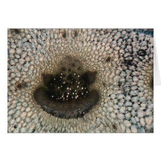 Sellerie unter dem Mikroskop Karte