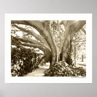 Sepia-großes Baum-Fotografie-Kalifornien-LA Plakat