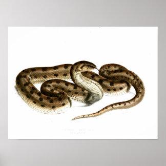 Serpent vintage Dessin-Brown-repérer-Africain