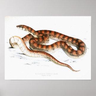 Serpent vintage Dessin-Orange-rayé-Africain