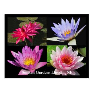 Sg-Wasserlilie-Collagen-Postkarte #6Nw 600 Postkarte