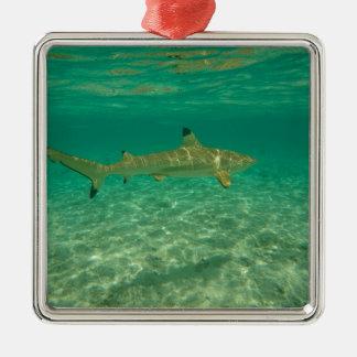 Shark in bora bora quadratisches silberfarbenes ornament