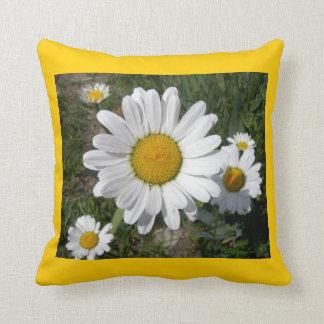 Shasta Gänseblümchen (Chrysanthememaximum) Kissen