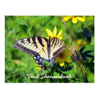 Shenandoah Schmetterling Postkarte