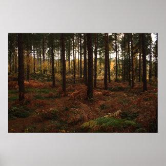 Sherwood Forest-Druck Poster