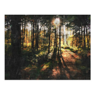 Sherwood Forest-Sonnenuntergang Postkarte