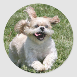Shih courant heureux Tzu Sticker Rond