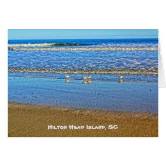 Shorebirds in der Brandung! Hilton Head Island Sc Karte