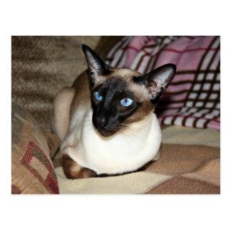 Siamesische Katze, die auf Couch sich entspannt Postkarte