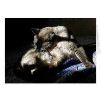 Siamesische Katze, die auf Unalaska Insel sich Karte