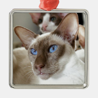 Siamesische Katzen-Haustier-Tiere Quadratisches Silberfarbenes Ornament