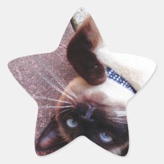 Siamois espiègle sticker étoile