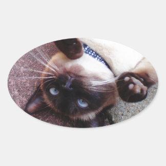 Siamois espiègle sticker ovale