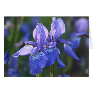 Sibirische Iris-Paare Karte