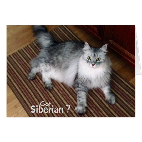 Sibirische Katzen-Raum-Anmerkungs-Karte Karte