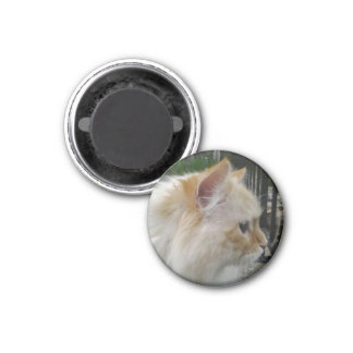 Sibirische Waldkatze Runder Magnet 2,5 Cm