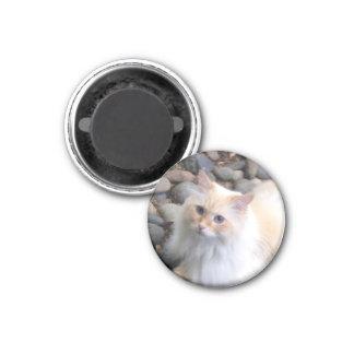 Sibirische Waldkatze Runder Magnet 3,2 Cm