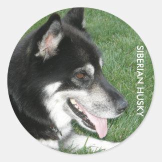 Sibirischer Schlittenhund-Foto Runder Aufkleber