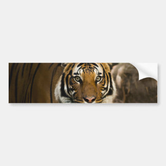 Sibirischer Tiger Autoaufkleber