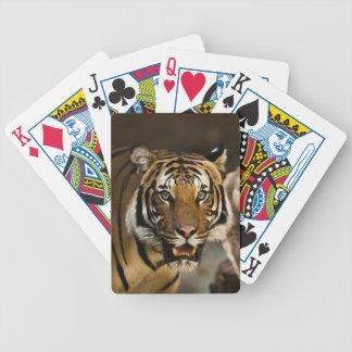 Sibirischer Tiger Bicycle Spielkarten