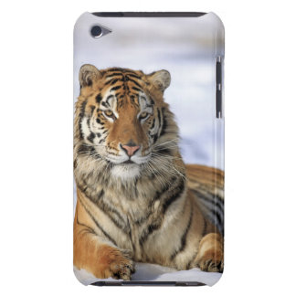 Sibirischer Tiger der Pantheratigris altaica Asi iPod Touch Case-Mate Hülle