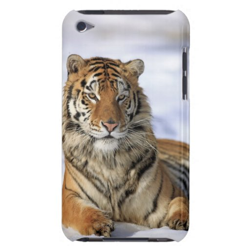 Sibirischer Tiger, der Pantheratigris altaica, Asi iPod Touch Case-Mate Hülle