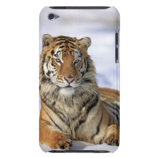 Sibirischer Tiger, der Pantheratigris altaica, Case-Mate iPod Touch Case